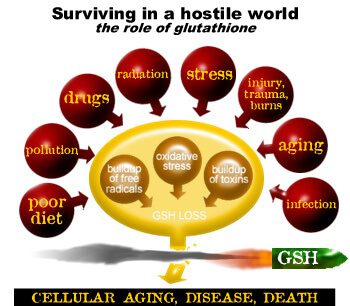 The role of the glutathione chart
