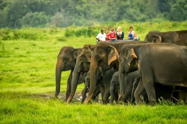 National Park Safari Adventure
