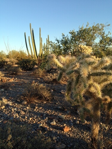 Organ Pipe National Park