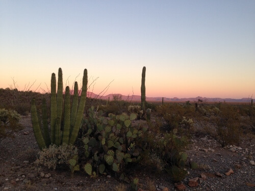Sunset Organ Pipe Park