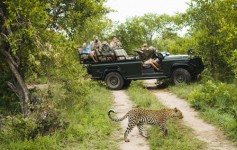 safari travel tips