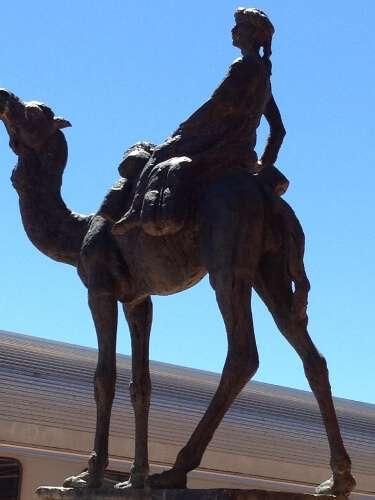 The Afghan Cameleer