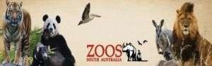 Adelaide Zoo Banner