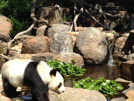 Don't Miss The Adelaide Zoo In Australia