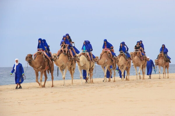 Experience The Cabo Adventures Camel Tour