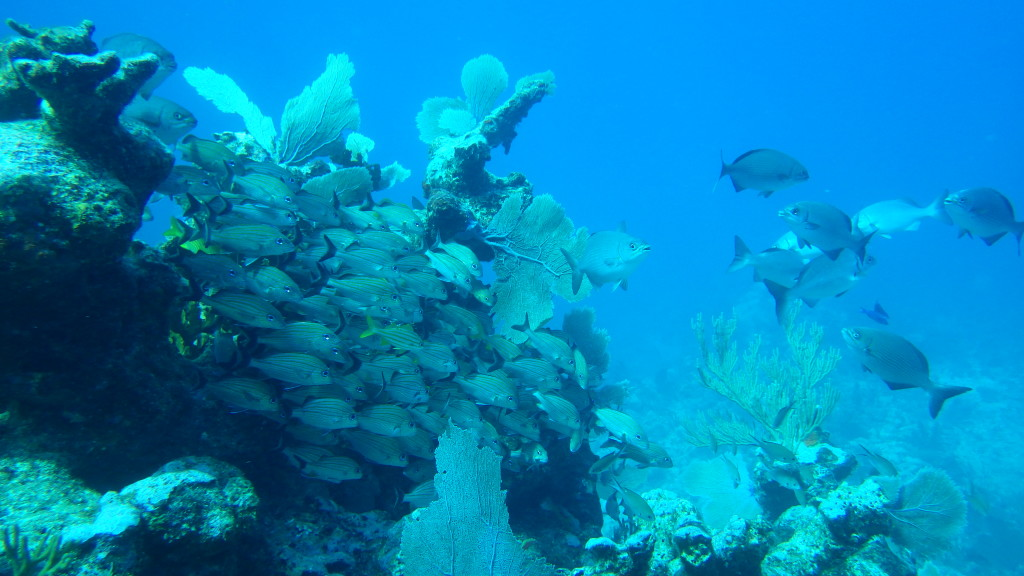 Mexico Marine Life