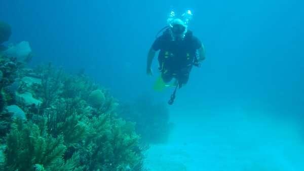 Reef Diving Tulum Mexico