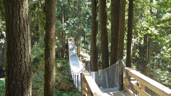 Cascade Falls Regional Park Suspension Bridge