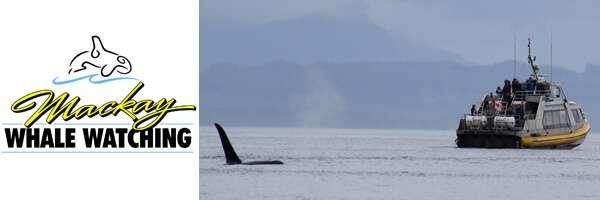 Mackay Whale Watching Logo