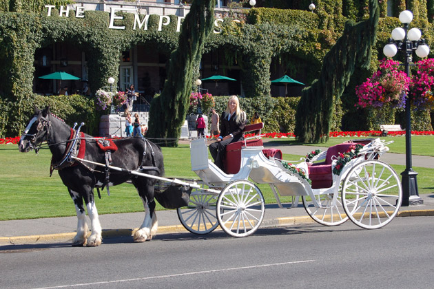 Horse Drawn Carriage Rides Victoria BC