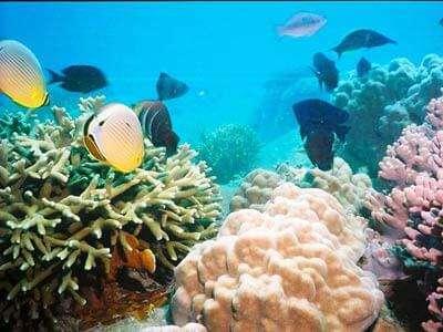 Hon Mun Island Marine Life