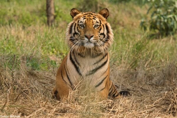 The Ranthambore National Park Safari in India