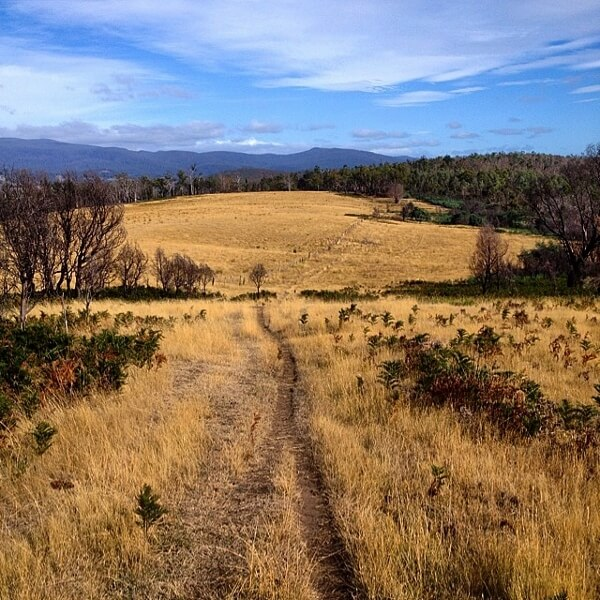 The Tasmanian Trail