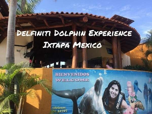 Experience The Delfiniti Dolphin Swim Ixtapa Mexico
