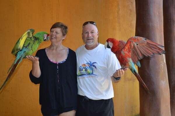 Delfiniti Ixtapa Parrots