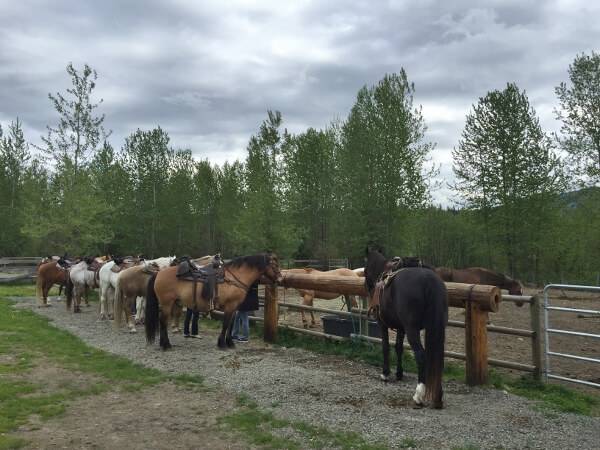 Battle Mountain Equine Trail Rides
