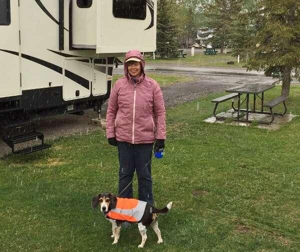 Mountain View Camping Pet Friendly