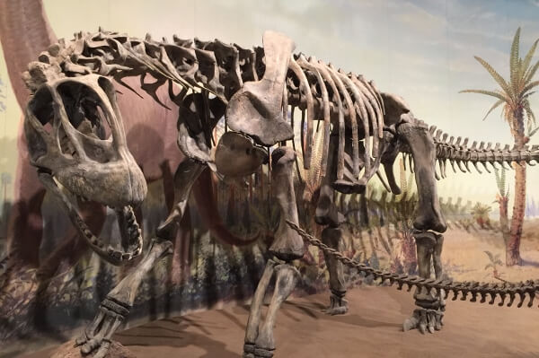 The Royal Tyrrell Dinosaur Exhibit