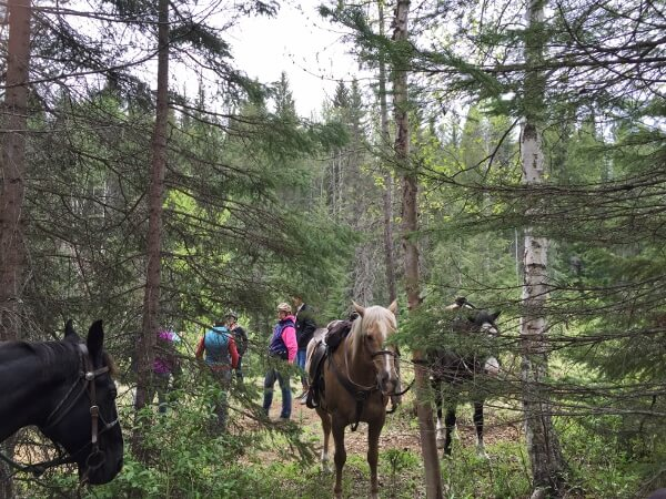Wells Gray Park Western Trail Rides