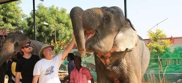 Eleday Elephants Jaipur India