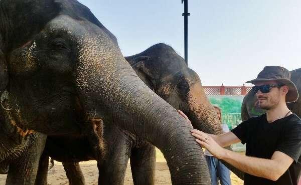 Friendly Eleday Elephants