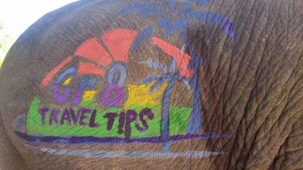 Gr8 Travel Tips Logo on Elephant