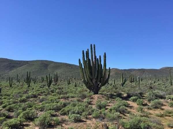 Catavina Baja Mexico Cactus