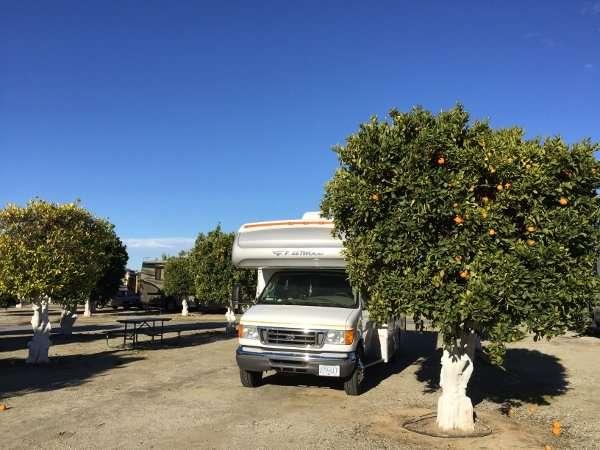 Orange Grove RV Park Camp Sites