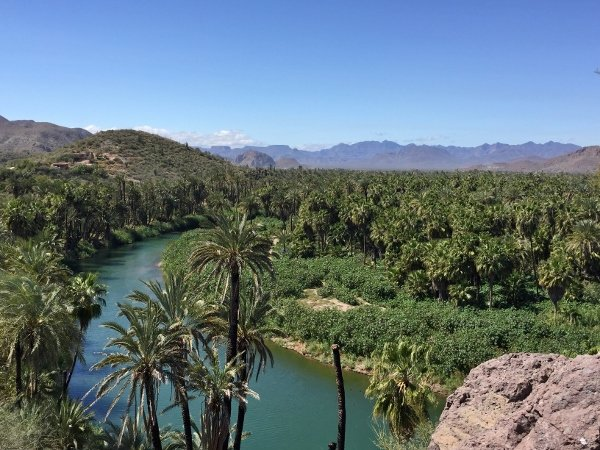 Mulege Mexico Date Palms and River Valley