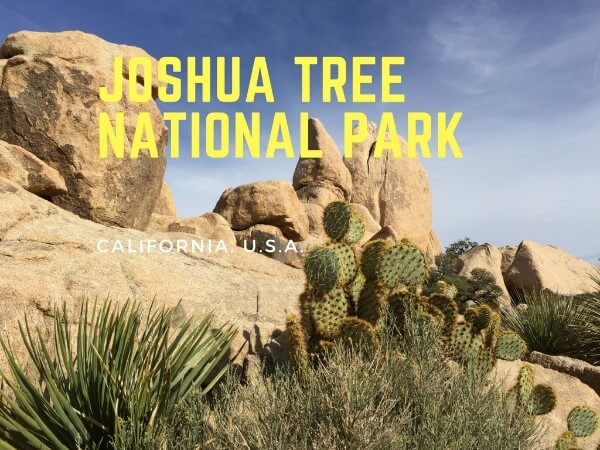 Joshua Tree National Park in California State