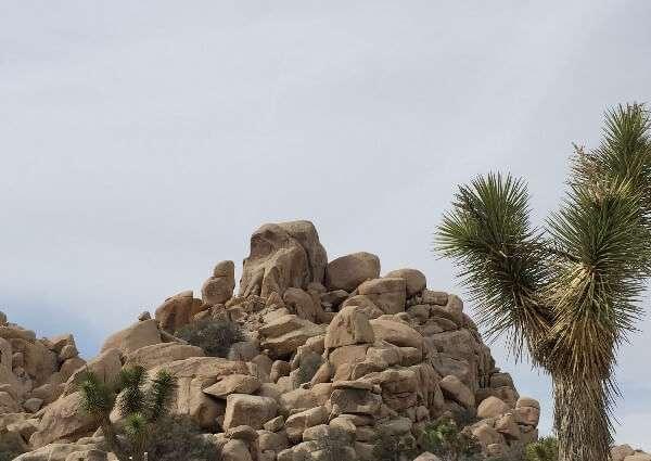 Joshua Tree National Park California Boulders