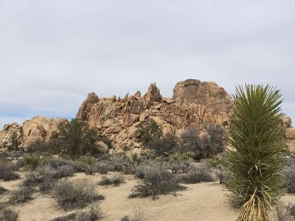 Joshua Tree National Park California State