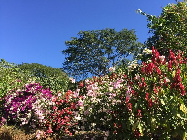 Flowers in Huatulco Mexico