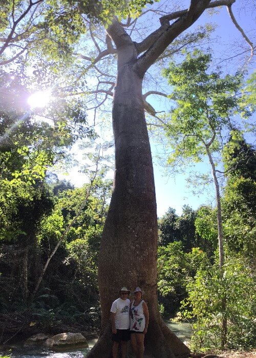 Gigantic Tree in Huatulco Mexico