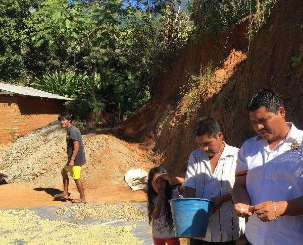 Village Coffee Production Mexico