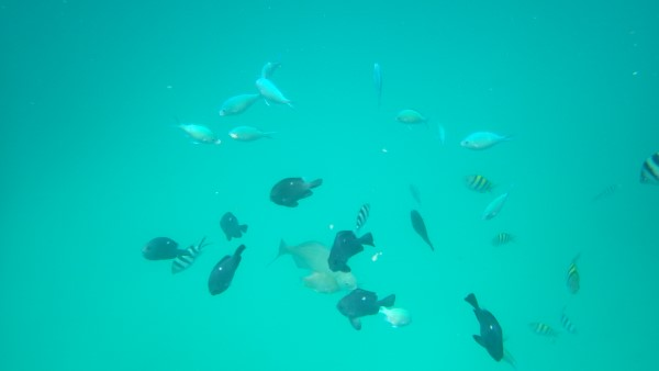 Isle Of Pines Tropical Fish