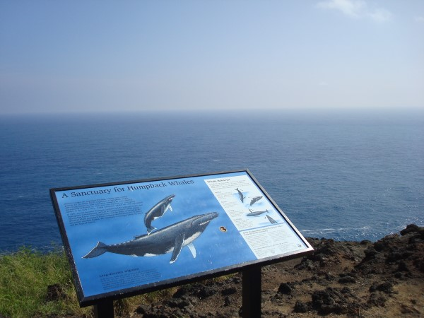 Humpback Whales Information Sign