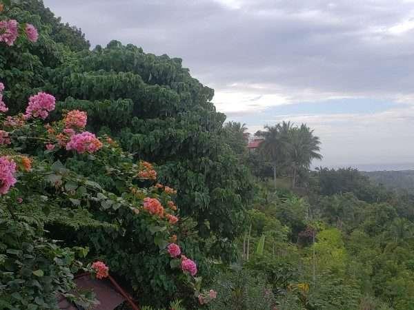 Bohol Island landscape