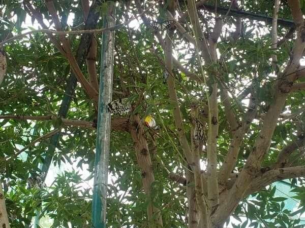 Bohol Island Butterfly Garden