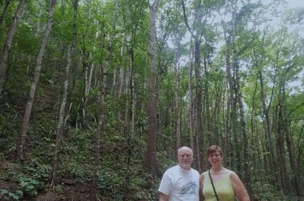 Mahogany forest on Bohol Island