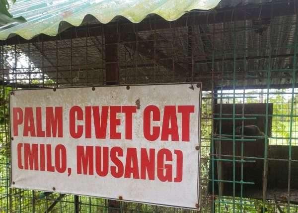Palm Civet Cat case