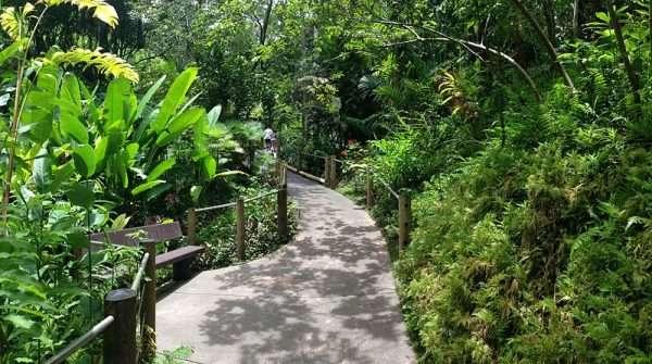 Hawaii-Tropical-Garden-Walkway