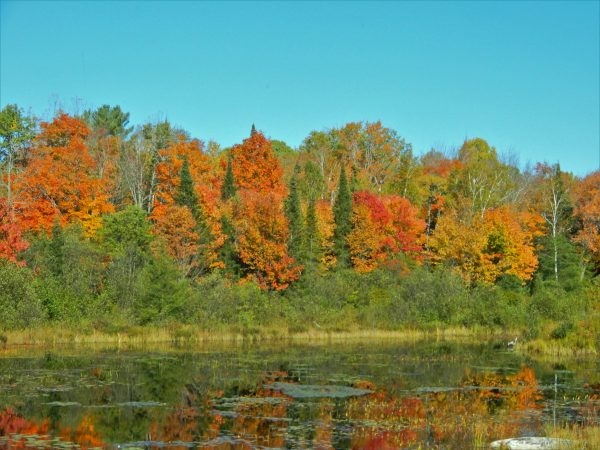 Canadian Fall Colours