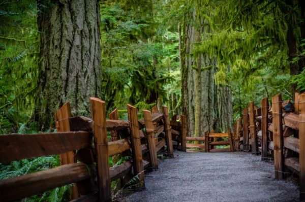 Cathedral Grove Provincial Park BC