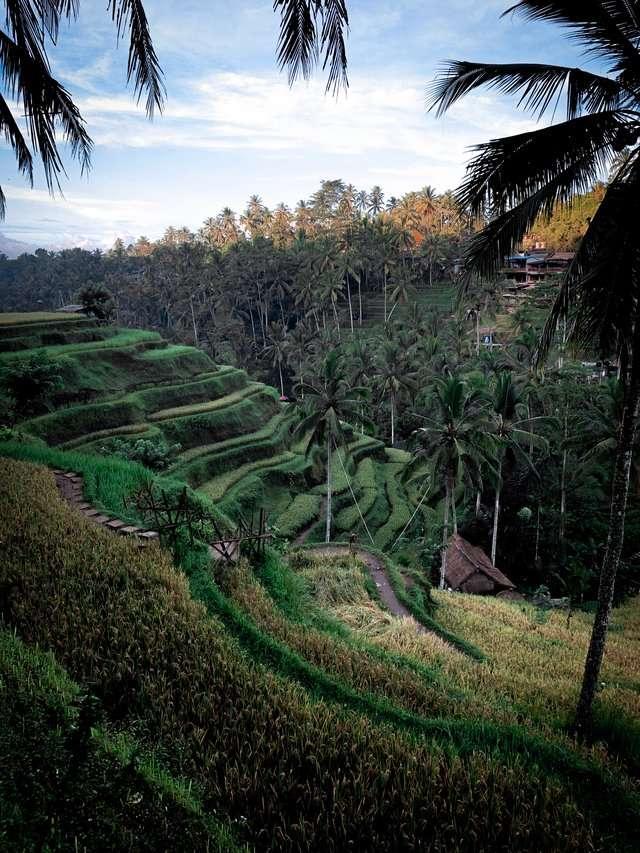Ubud Indonesia