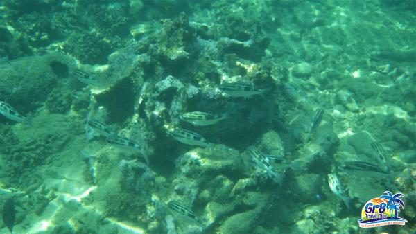 Tropical Fish Vanuatu